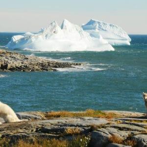 Auf großer Fahrt nach Grönland